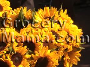 Sunflowerthumb