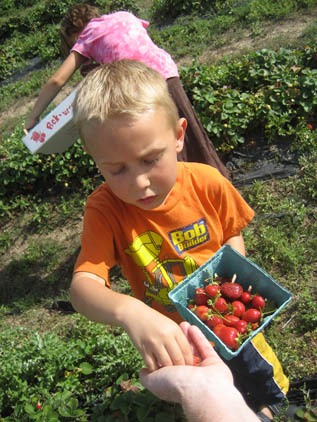 Picking_berries